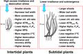 Morphological and photoacclimatory responses of Zostera marina.png