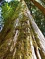 Mount Rainier National Park, Washington (23024671220).jpg