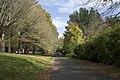 Mount Wilson NSW 2786, Australia - panoramio (36).jpg