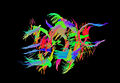 Mouse Tractography.jpg