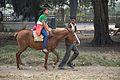 Mule Riding - Brigade Parade Ground - Kolkata 2013-01-05 2410.JPG