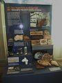Museumfür NaturkundePalaeontologyPreparation.jpg