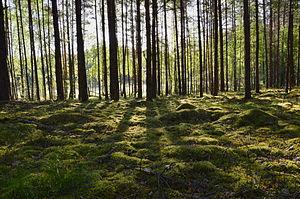 Värska Parish - Mustoja Nature Reserve