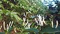 My garden3.jpg