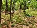 NP Podyjí, les u Popic (1).jpg