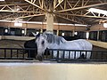 N Equestrian Center.jpg