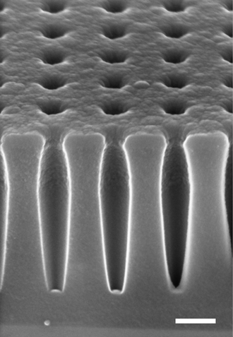 Nanohole - Angled cross-sectional scanning electron micrograph of a nanohole array etched in amorphous silicon, with a thin conductive polymer coating. Scale bar is 200 nm.