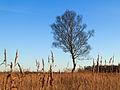 Nationaal Park Weerribben-Wieden. Eenzame berk tegen vrieslucht 02.jpg