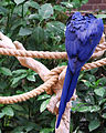 National Aviary (13020021435).jpg