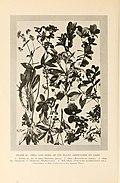 Natural history of Hawaii (Page 220) (7007409912).jpg