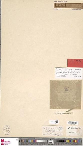 Pyropia - Image: Naturalis Biodiversity Center L.4084451 Porphyra columbina Mont. Algae Plant type specimen