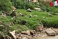 Nature 0190628-WA0104.jpg
