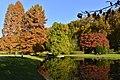 Nature luxuriante aux étangs de Dirkbeek (22904166955).jpg