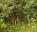 Naturschutzgebiet Neuenkirchener Moor 03.JPG