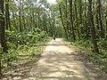 Nawabgonj Jatio Uddan Road 20190605 130653.jpg