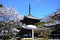 Negoro-ji, Daito (Pagoda) -1 (April 2012) - panoramio.jpg