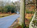 New Forest scene - geograph.org.uk - 1713376.jpg