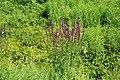 Nordkirchen-090806-9385-Schlosspark-Vegetation.jpg
