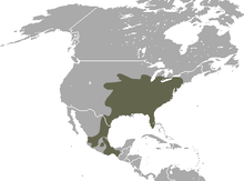North American Least Shrew area.png