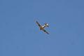 North American SNJ-6 Texan Marines overhead TICO 13March2010 (14576473256).jpg