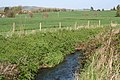 Norton Fitzwarren, Back Stream - geograph.org.uk - 159293.jpg