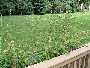 A garden lawn