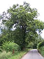 Oak Tree - with a sad plaque - geograph.org.uk - 34116.jpg