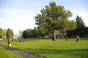 Orissaare - Image: Oak tree on a football field