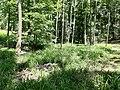 Oberrimbacher Erdfälle 202006 08.jpg