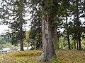 Obiro, Uonuma, Niigata Prefecture 946-0101, Japan - panoramio (3).jpg