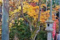 Ohara 2008-11-26 (3261144261).jpg