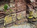 Old Red Sandstone bei Laugharne (Taf-Mündung).jpg