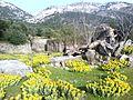 Old Valsamata ruins, Kefalonia 19.jpg