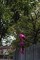 Olivia-Rae balloon release debris - 2018-08-28 - Andy Mabbett - 01.jpg