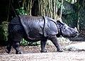 One Horned Rhinocerous 02.jpg
