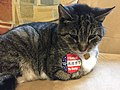 One cat, one vote (45701141952).jpg