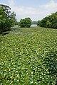 Onuma Park Nanae Hokkaido Japan07bs5.jpg