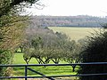 Orchard and farmland from Marley Lane - geograph.org.uk - 363614.jpg