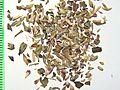 Origani herba by Danny S. - 001.jpg
