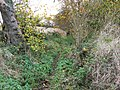 Overgrown footpath - geograph.org.uk - 1557608.jpg