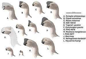 Oviraptoridae - Oviraptorid profiles