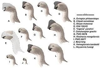 Timeline of oviraptorosaur research