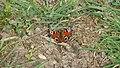 P1020494 Butterfly.jpg