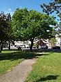 P5089424 Eiche Naturdenkmal WN-033.JPG