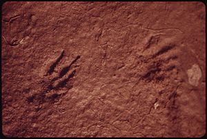 PARKA SQUIRREL TRACKS ALONG THE WEST BANK OF T...