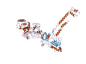 BRCA2 - structure of a brca2-dss1 complex