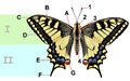 Papilio machaon 01 04102009tagged.png