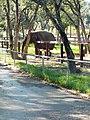 Parc animalier de Taza 13.jpg