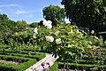 Parc de Bercy - Roseraie 004.JPG