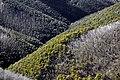 Parque Nacional Alpino 04.jpg